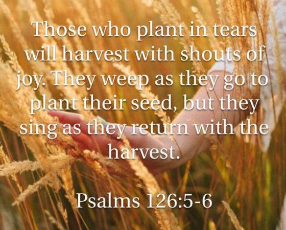 MIRACLE HARVEST (sowing-part 1)